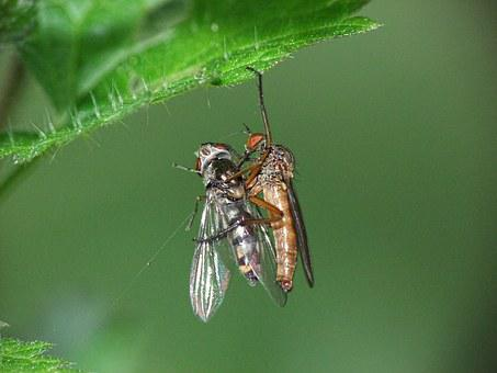 Insect, Survival, Nature, Animal, Wildlife, Wild