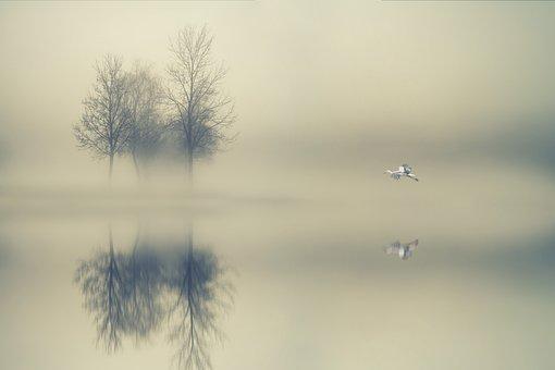 Trees, Fog, Water, Lake, Stork, Autumn, Mystical, Magic