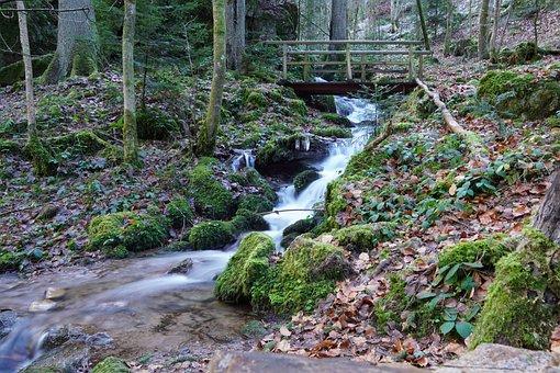 Bach, Bridge, Schramberg, Falkenstein, Forest