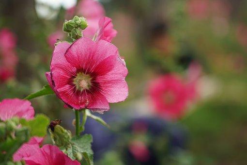 Flowers, Red Flower, Beautiful, Red, Beauty