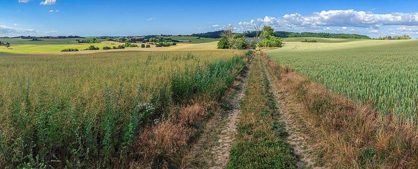 Field, Go, Scania, Sweden, Summer, Landscapes, Bed