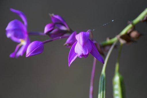 Flower, Blur, Buty, Love, Light, Web