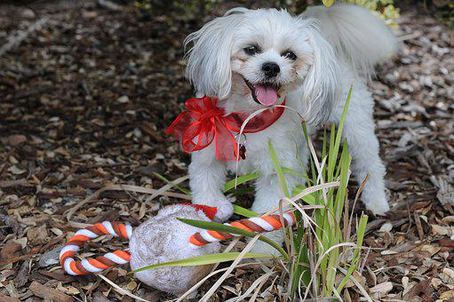 Christmas Stocking, Dog, Christmas, Candy Cane