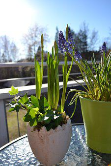 Narcissus, Spring, Head, Easter, Flower, Plant, Garden