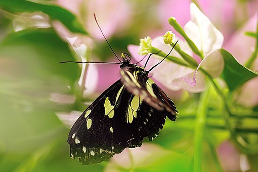 Butterfly, Insect, Nature, Wing, Flower, Macro