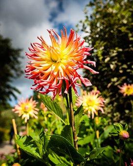 Flowers, Sky, Clouds, Dahlia, Bloom, Landscape, Red