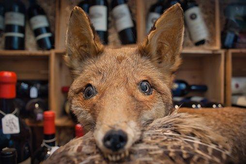 Fuchs, Goose, Wine, Window, Atmosphere