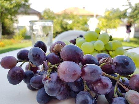 Grapes, Purple, Vineyard, Fruit, Garden