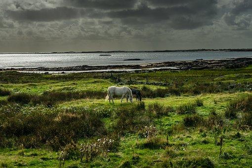 Connemara, Pony, Horse, Ireland, Animal, Mane, Sunset