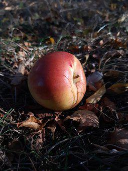 Apple, Autumn, Fall, Colorful, Leaves, Grass, Nature