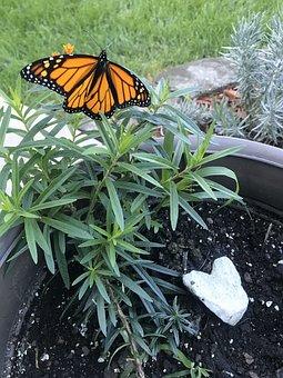 Butterfly, Monarch, Heart, Nature, Gardens