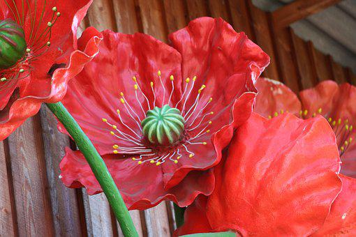 Poppy Flower, Art, Red, Blossom, Bloom, Poppy, Plant