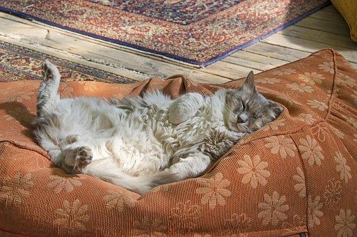 Sleeping Cat, No Worries, Cat Sleeping On Back, Cat Nap