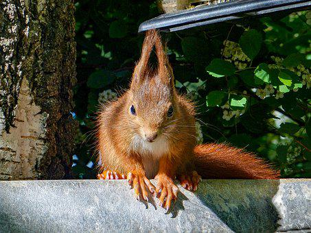 Squirrel, Rodent, Curious, Foraging, Hungry, Trustful