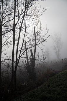 Sun, Tree, Field, Fog, Landscape, Path