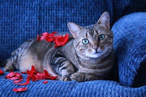 Cats, Feline, Pet, Sweet, Cute, Domestic, Animals