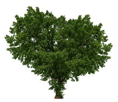 Tree, Heart, Isolated, Plant, Transparent, Nature, Wood