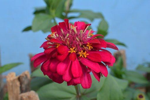 Chinese New Year Flowers, Viet Nam Holiday