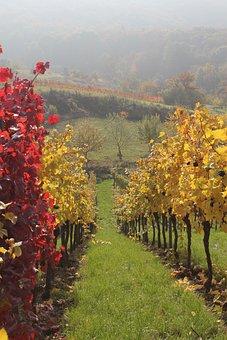 Vineyard, Wine, Nature, Grapes, Winery, Winegrowing