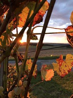 Autumn, Vines, Wine, Vine, Winegrowing, Leaves, Grapes
