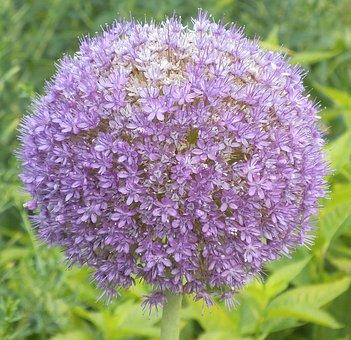 Flower, Blossom, Bloom, Flower Ball, Nature, Flora