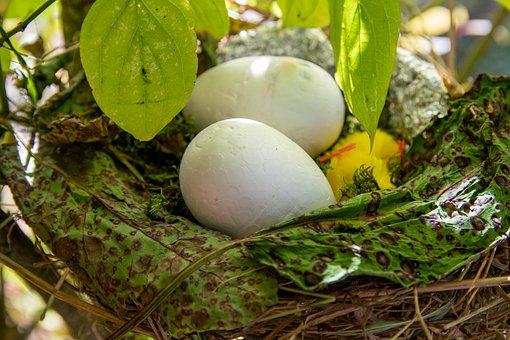 Easter, Easter Nest, Chicken, Easter Eggs