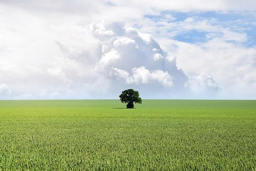 Blue, Cloud, Copy Space, Countryside, Environment