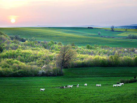 Countryside, Cows, Twilight, Cattle, Agriculture, Rural