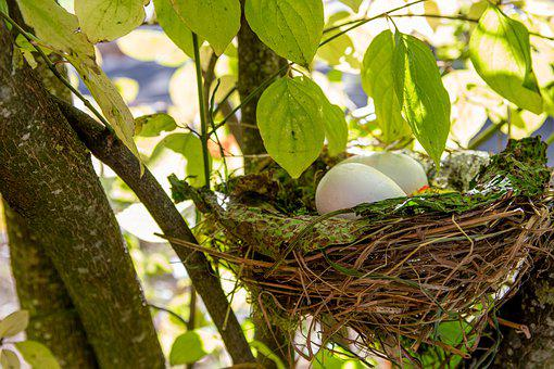 Easter Bush, Nest, Easter Nest, Easter Egg, Easter