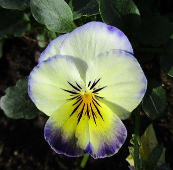 Flower, Flowers, Thinking, Garden, Floral, Flora