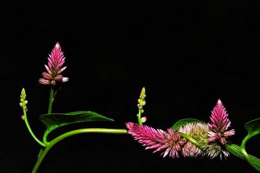 Macro, Flower, Natural, Black, White