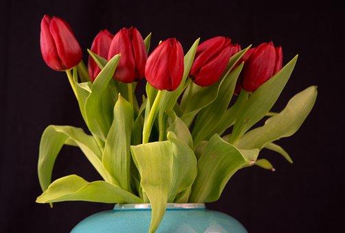 Tulip, Spring, Flower, Garden, Blossom, Bloom, Plant