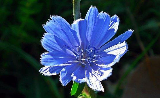 Flower, Grasshopper, Blue, Meadow
