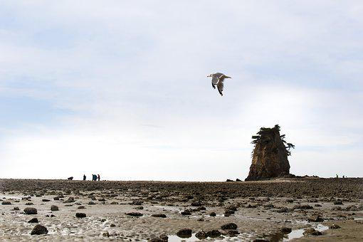 Island, Seagull, Sea, Sky, New, Cloud, Beach, Scenery