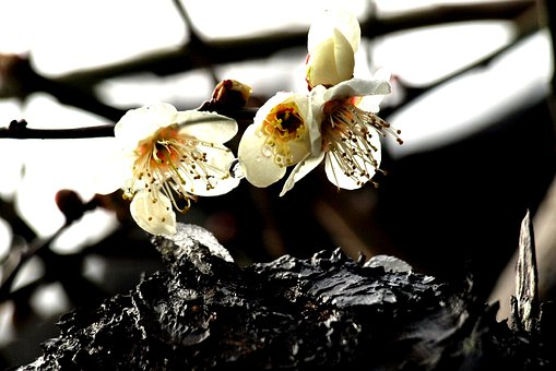 Natural, Plant, Bark, Flowers, Petal