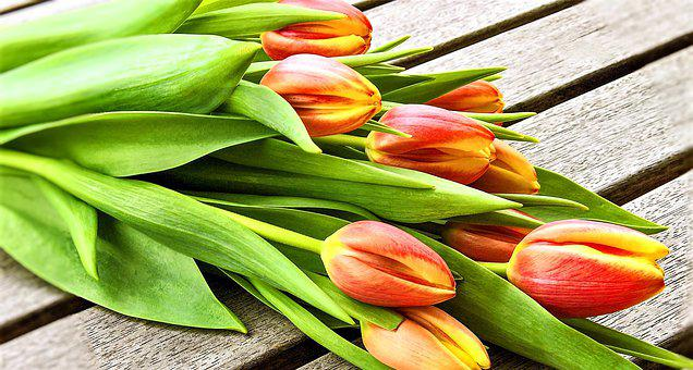 Flowers, Tulips, Tulip Bouquet, Spring Flowers, Yellow