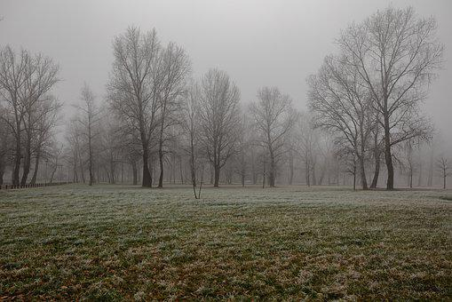 Fog, City, Misty, Landscape, Light, Frozen, Town, Park