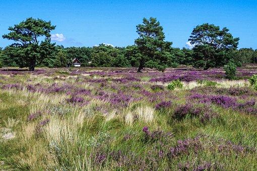 Heide, Landscape, Tree, Nature, Heathland