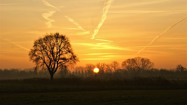 Tree, Nature, Sunrise, Landscape, Winter, Cold, Horizon