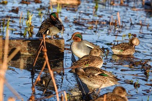 Animal, Pond, Water, Waterweed, Bird