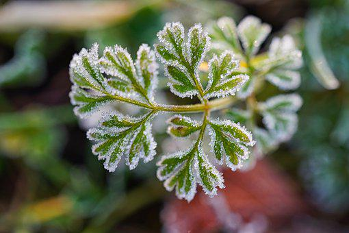 Frost, Winter, Cold, Leaf, Frosty, Frozen, Morning