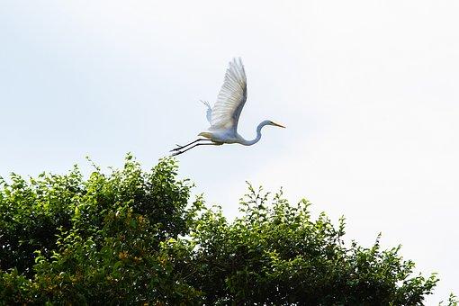 Amazonia, Bird, Landscape