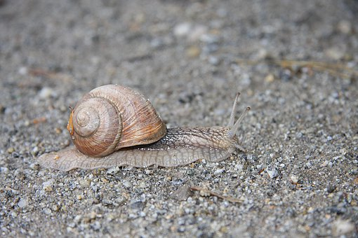 Snail, Shell, Slowly, Crawl, Mollusk, Animal, Mucus