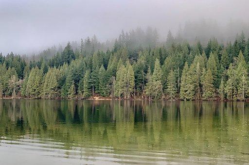 Buntzen Lake, Canada, Anmore, Trees