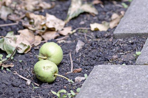 Fruit, Apple, Green, Down, Earth, Leaves, Dry, Autumn