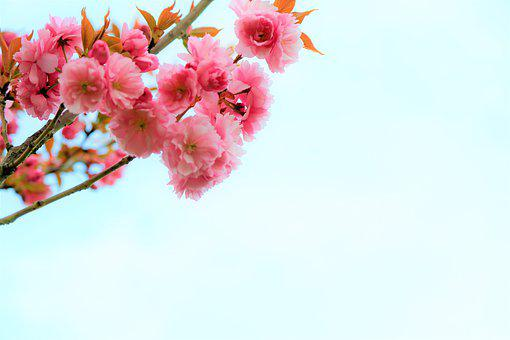 Background, Spring, Nature, Flowers