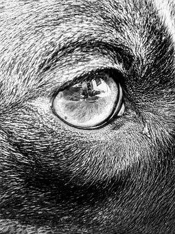 Dog Eye, Eye, Black And White, Brown Eye, Animal Eye