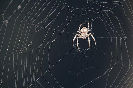 Spider, Cobweb, Insect, Cobwebs, Web, Case