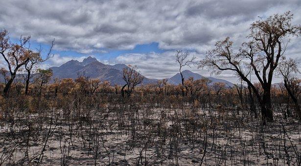 Bushfire, Devastation, Australia, Landscape, Disaster