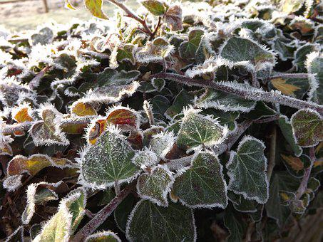 Frost, Leaves, Winter, Hoarfrost, Frozen